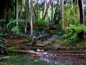 O jardim botânico de são Paulo. Fomos lá hoje, fiquei bem encantado... É muito grande e não tem ninguém. Vale muito a pena!